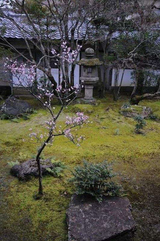 Kyoto cerisier jardin de mousse for Jardin kyoto