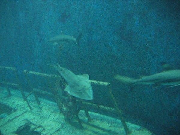 aquarium du grand lyon centerblog