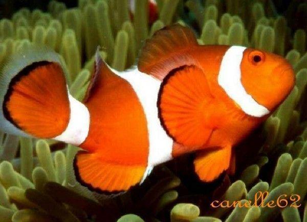 poissons exotiques et aquariums page 20. Black Bedroom Furniture Sets. Home Design Ideas