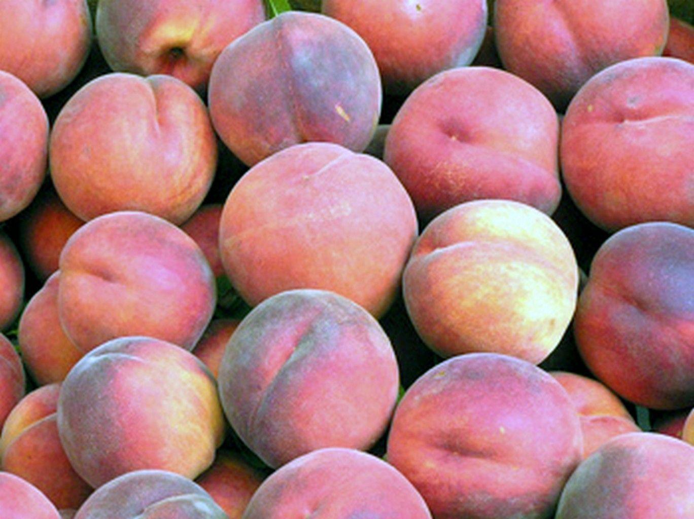Arbres fruitiers des zones temperees page 2 - Peche a peau lisse ...