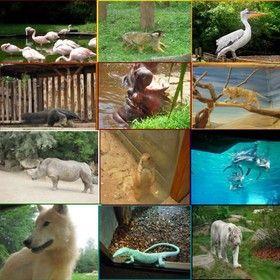 zoo-amneville.jpg