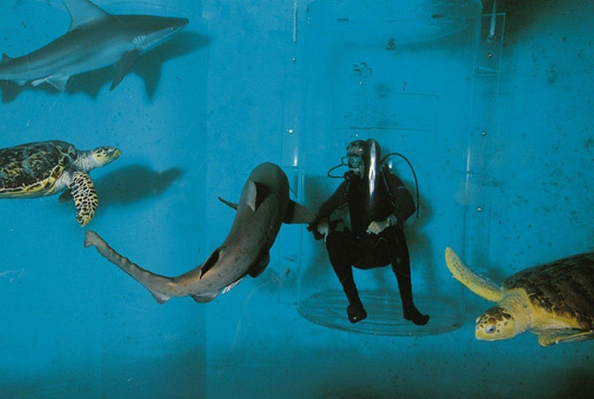 aquarium du monde page 8