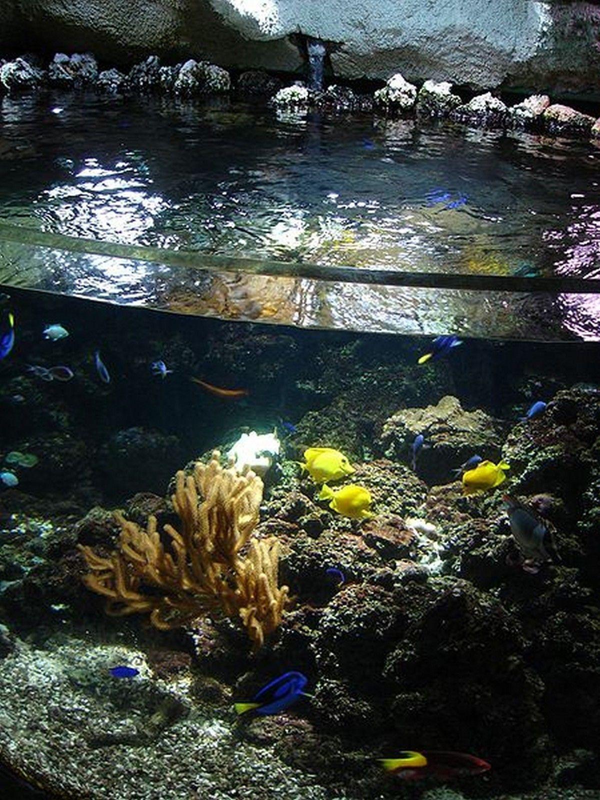 aquarium du monde page 7