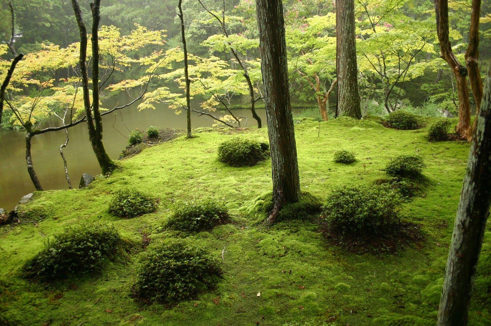 Jardins japonais for Jardin unesco