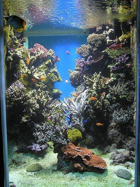 poissons exotiques et aquariums page 21. Black Bedroom Furniture Sets. Home Design Ideas